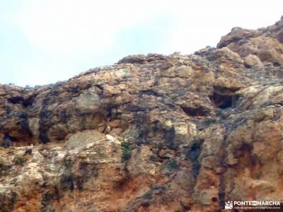 Cañón Caracena; Encina  Valderromán; agencias de trekking grupos viajes a la sierra